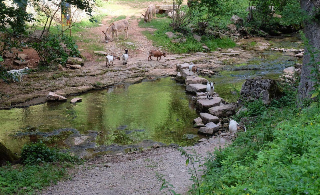 Eco pastoralisme